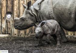 Zoológiai szenzáció a Nyíregyházi Állatparkban – Rinocérosz bébi született!