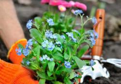 Virágos Nyíregyháza – Közel százezer virágot ültetnek a város köztereire